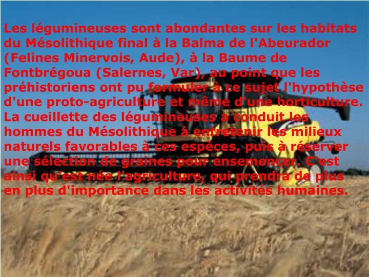 Les légumineuses sont abondantes sur les habitats du Mésolithique final à la Balma de l'Abeurador (Felines Minervois, Aude), à la Baume de Fontbrégoua (Salernes, Var), au point que les préhistoriens ont pu formuler à ce sujet l'hypothèse d'une proto-agriculture et même d'une horticulture.