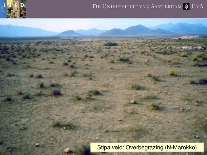 Stipa veld: Overbegrazing (N-Marokko)