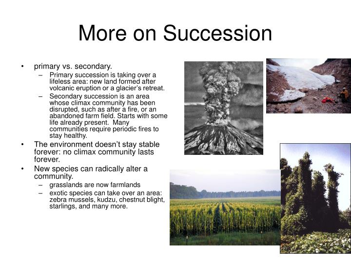 More on Succession