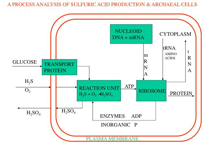 A PROCESS ANALYSIS OF SULFURIC ACID PRODUCTION & ARCHAEAL CELLS
