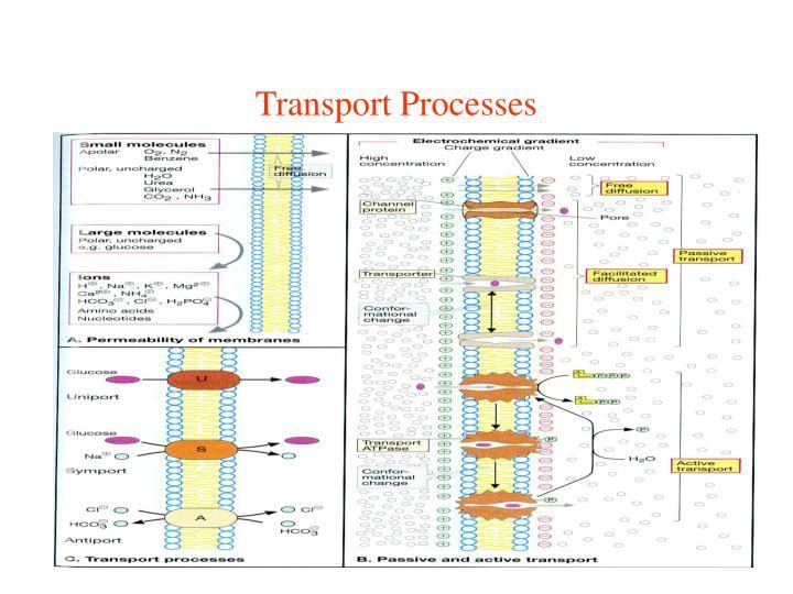 Transport Processes