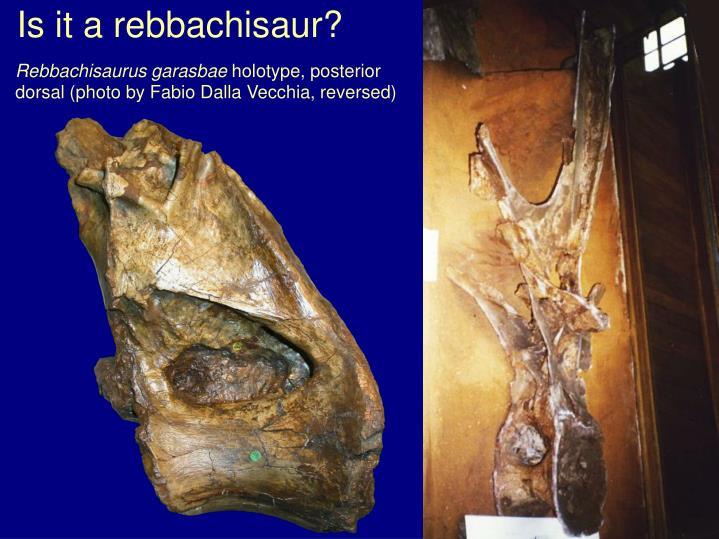 Is it a rebbachisaur?