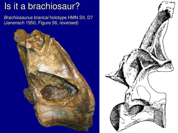 Is it a brachiosaur?