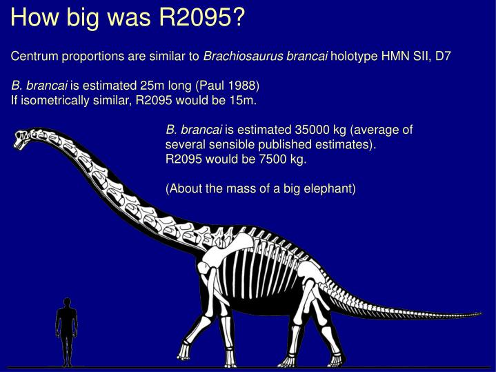 How big was R2095?