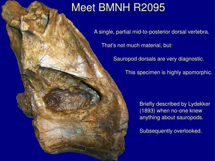 Meet BMNH R2095