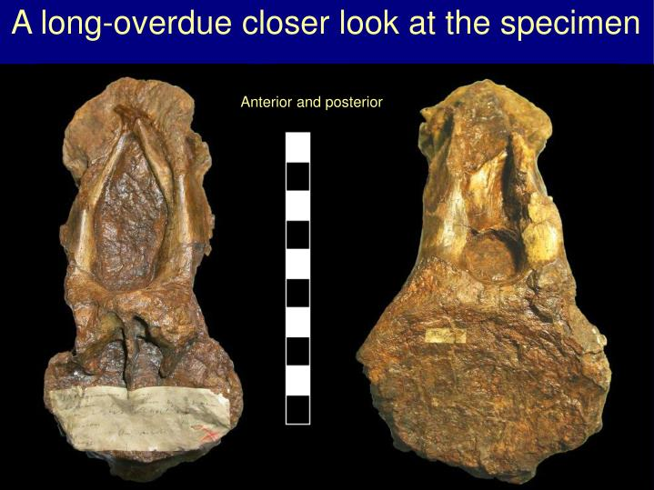 A long-overdue closer look at the specimen