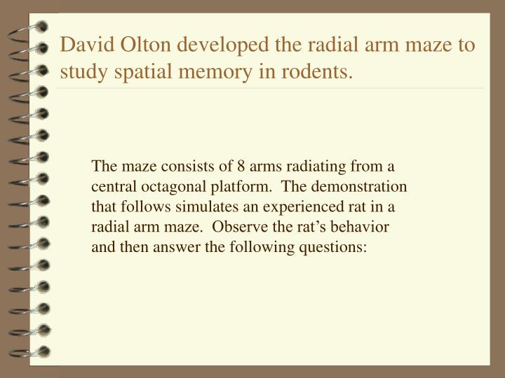 David Olton developed the radial arm maze to study spatial memory in rodents.