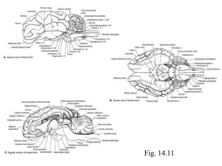 Fig. 14.11