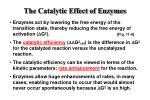 the catalytic effect of enzymes