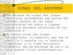 zonas del abdomen