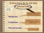 estructura de la c l lula procariota