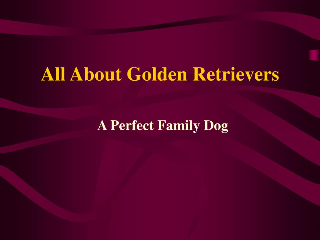 all about golden retrievers l.