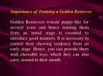 importance of training a golden retriever