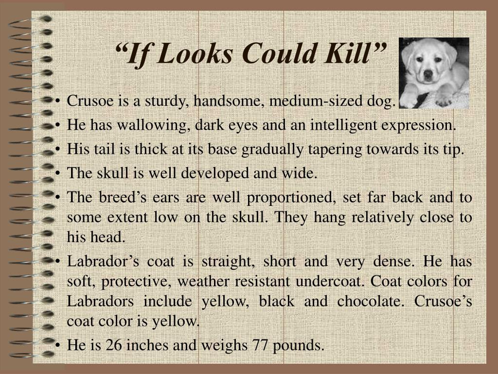 Crusoe is a sturdy, handsome, medium-sized dog.