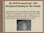 my well groomed lab the disciplined darling in the family