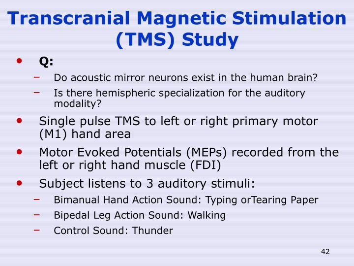 Transcranial Magnetic Stimulation (TMS) Study