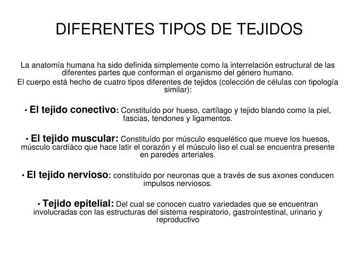 Ppt conceptos generales de anatom a powerpoint - Tipos de tejados ...