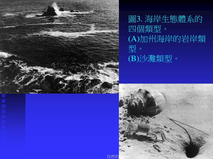 圖3. 海岸生態體系的四個類型。