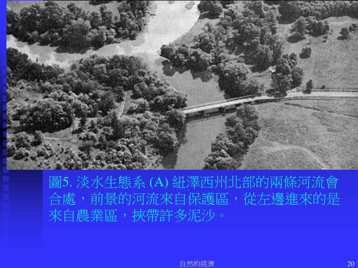 圖5. 淡水生態系 (