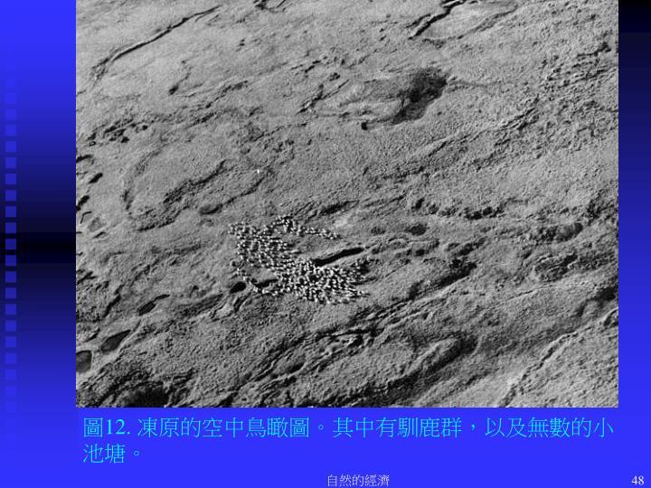 圖12. 凍原的空中鳥瞰圖。其中有馴鹿群,以及無數的小池塘。