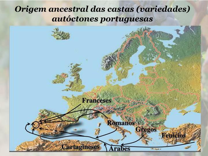Origem ancestral das castas (variedades) autóctones portuguesas