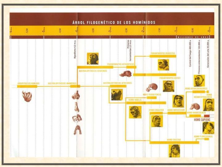 Or genes cinco hitos en la evoluci n humana 1336588