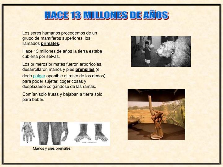 HACE 13 MILLONES DE AÑOS