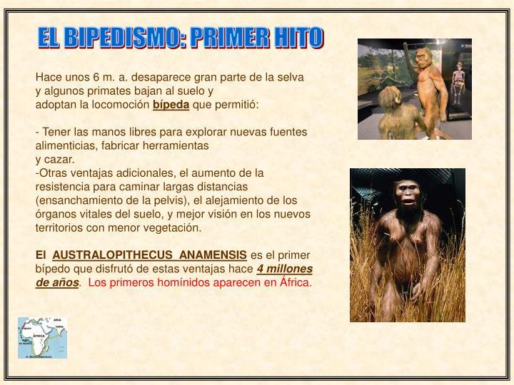EL BIPEDISMO: PRIMER HITO