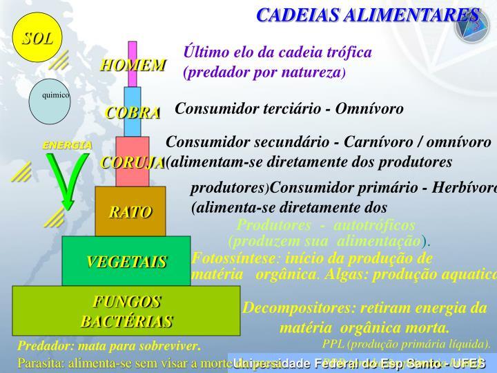 CADEIAS ALIMENTARES