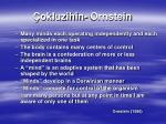 okluzihin ornstein