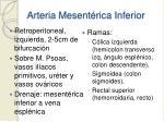 arteria mesent rica inferior