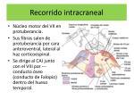 recorrido intracraneal