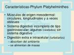 caracter sticas phylum platyhelminthes2
