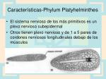 caracter sticas phylum platyhelminthes3