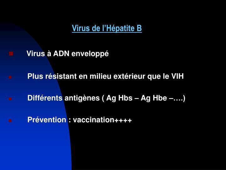 Virus de l'Hépatite B