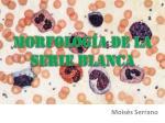 morfolog a de la serie blanca