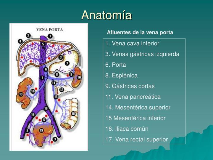 PPT - Semiología de la trombosis portal en TCMD: a propósito de 50 ...