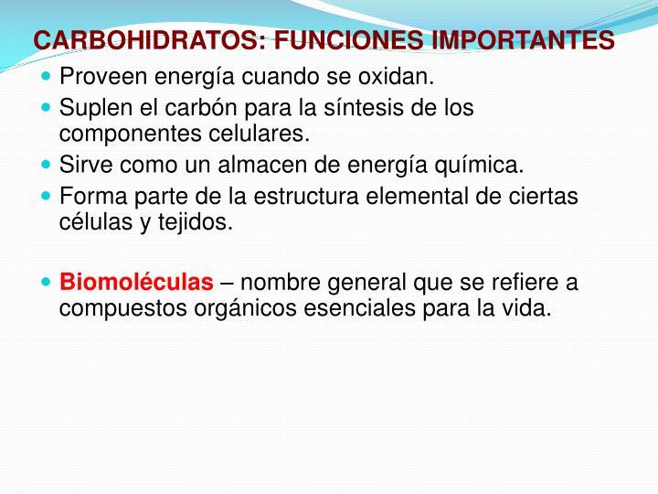 Carbohidratos funciones importantes