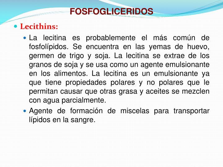 FOSFOGLICERIDOS