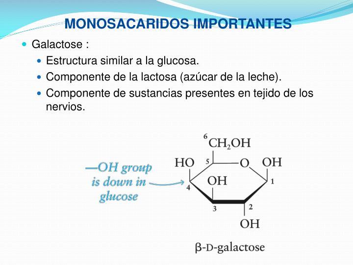 MONOSACARIDOS IMPORTANTES