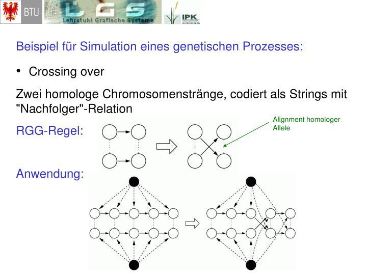 Beispiel für Simulation eines genetischen Prozesses: