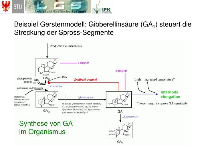 Beispiel Gerstenmodell: Gibberellinsäure (GA