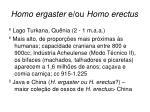 homo ergaster e ou homo erectus