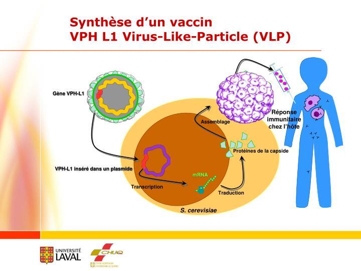 Gène VPH-L1