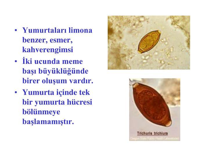 Yumurtaları limona benzer, esmer, kahverengimsi