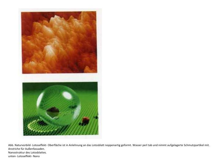 Abb. Naturvorbild- Lotoseffekt- Oberfläche ist in Anlehnung an das Lotosblatt noppenartig geformt. Wasser perl tab und nimmt aufgelagerte Schmutzpartikel mit.