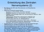 entwicklung des zentralen nervensystems 2