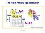 the high affinity ige receptor