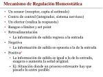 mecanismo de regulaci n homeost tica