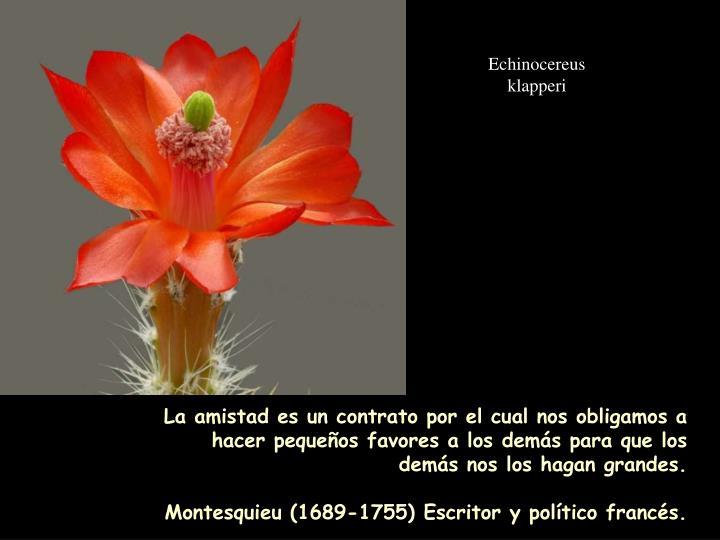 Echinocereus klapperi